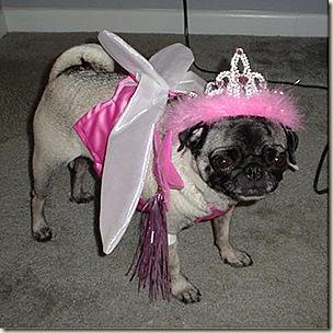 Fairy Gidget 5