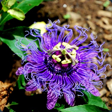 DSC_0502 flower
