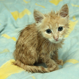 I don't think he liked his bath ;-) by Gray Hammett - Animals - Cats Kittens