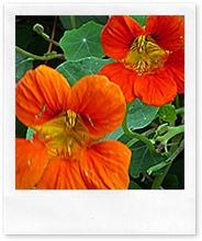 Garching, flowers 004