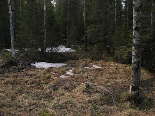 plaque_neige_foret_1629.jpg