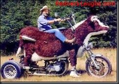cowasaki-motorcycle