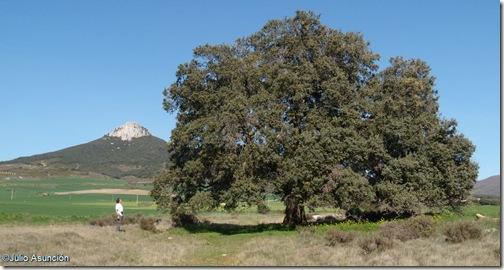 Encina monumental de Olóriz y panorámica de la Peña de Unzué - Valdorba