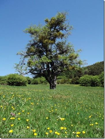 Espino de Azparren - monumento natural