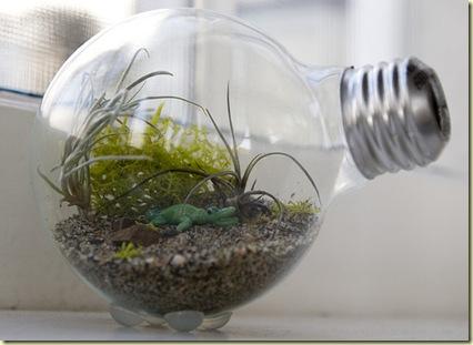 lightbulb-terrarium