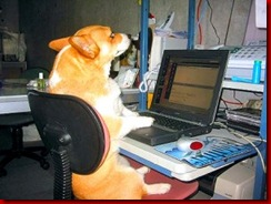dog-checking-email-300x225