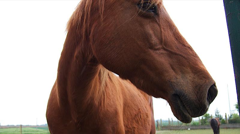 Test HDR sur un poney P1010701_2