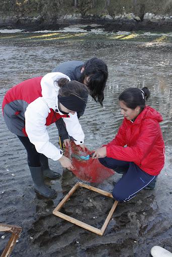 Tamizado das mostras de moluscos