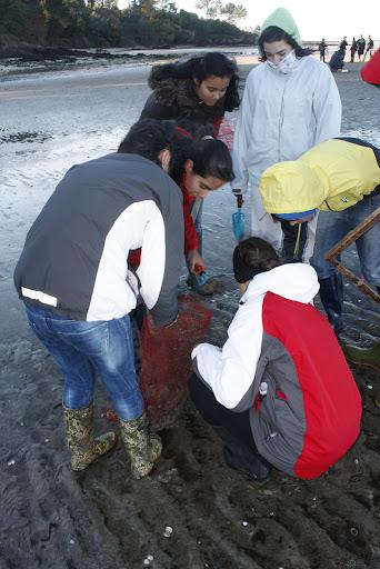Recollida de mostras de moluscos