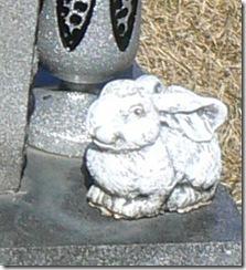 rabbit2-1