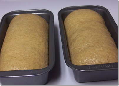 BBA-whole-wheat-bread 027