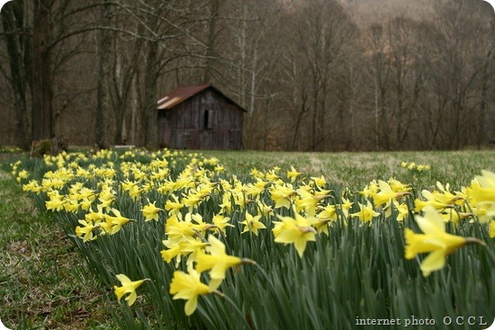 field-yellow-spring-wild-flowers