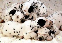 tatlı köpek resmi