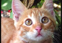 Güzel kedi resmi