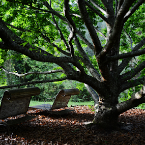 Resting in the shade by Marcello Toldi - Artistic Objects Furniture