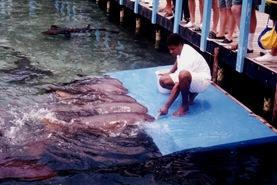 303 Nurse Shark