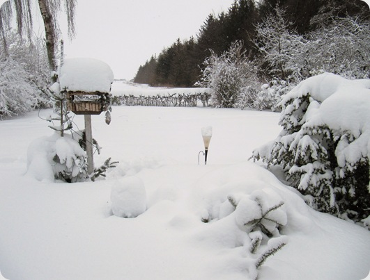 Vinter jan 2010 012