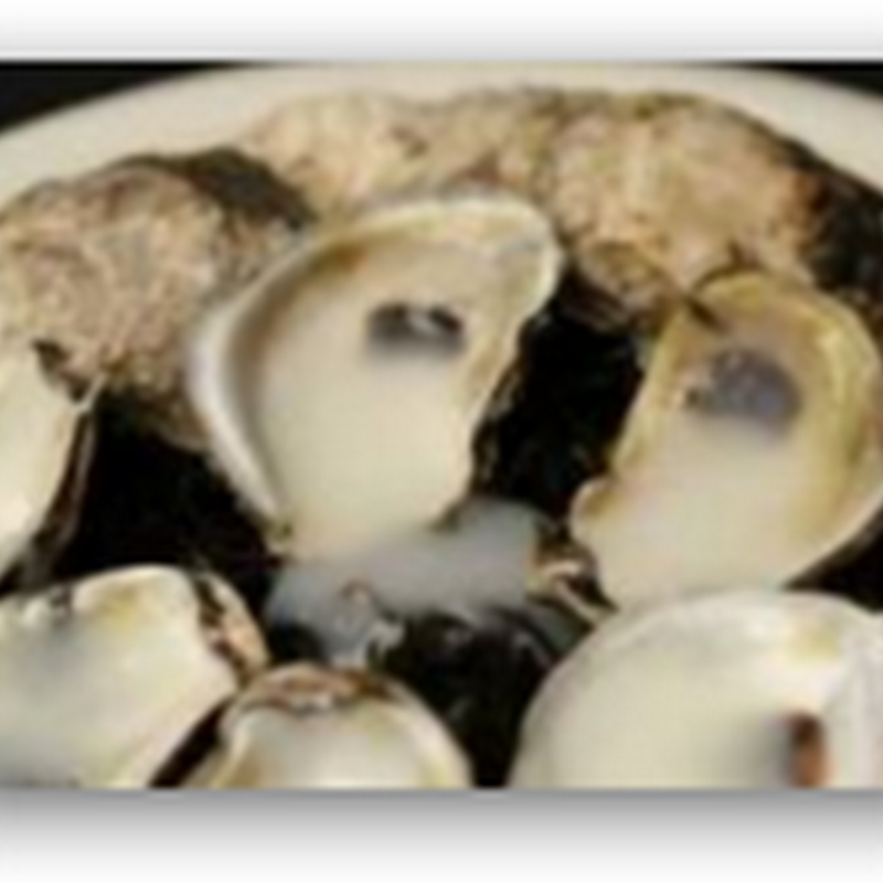 Oysters Contracting Herpes Killing Many as Well as Clams, Scallops and Other Mollusks During Breading Season - UK