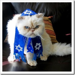 cat_rabbi
