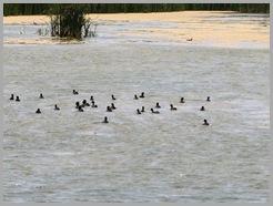 Estero Llano Grande State Park13