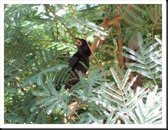 babycowbird