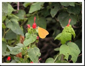 butterfly8jpg