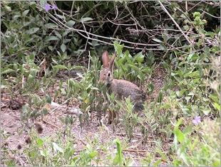 bunny07211