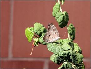 butterfly72302