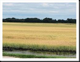 wheatfiled
