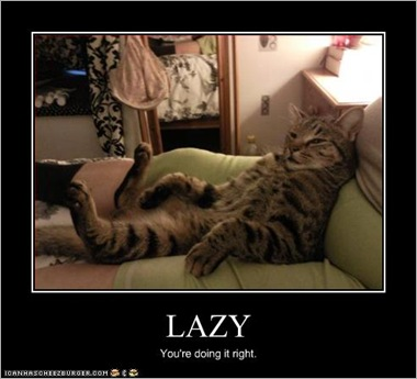 funny-pictures-cat-is-very-lazy