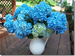 clovis flowers 010