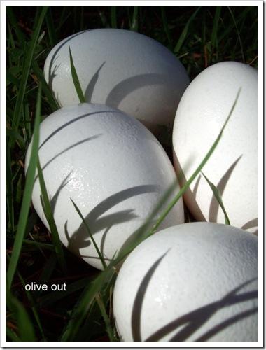 eggs black pt 084