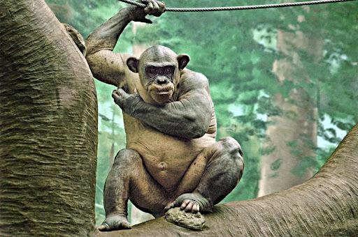 ape%20died%201000.jpg