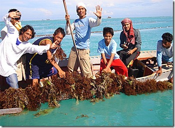Youth trainees visit their seaweed farms during a practical examination