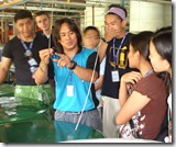 AQD's Mr. Charlemagne Recente shows the missionaries the seahorses cultured at AQD