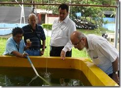 AQD's Ms. Bernardita Eullaran shows off the milkfish larvae raised at AQD's integrated hatchery to Dr. Felix Ayson, Dr. Anwar Eissa Al-Sunaiher and Mr. Baheej Mohammad Rasem