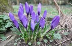 весна цветы блог итоги