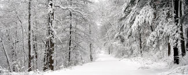 зимний пейзаж обои