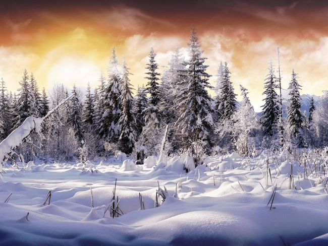 wallpaper winter