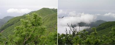 Ulleung Seonginbong Peak
