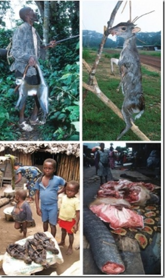 caccia in Africa