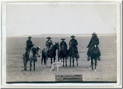 "Title: ""Roping gray wolf,"" Cowboys take in a gray wolf on ""Round up,"" in Wyoming Five cowboys on horses roping a wolf. 1887. Repository: Library of Congress Prints and Photographs Division Washington, D.C. 20540"