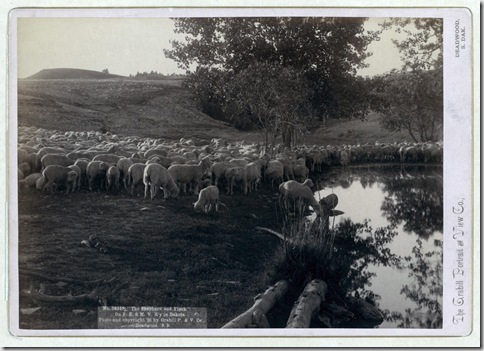 "Title: ""The shepherd and flock."" On F.E. & M.V. R'y. in Dakota Flock of sheep at pond of water. 1891. Repository: Library of Congress Prints and Photographs Division Washington, D.C. 20540"