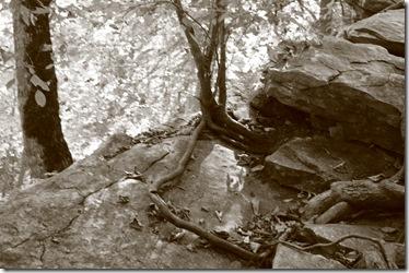 carter caves and lexington 240