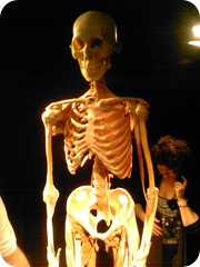 Body Worlds Exhibit 017