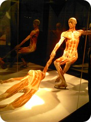 Body Worlds Exhibit 026