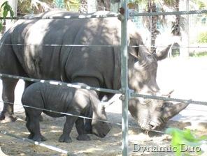 baby rhino (3)