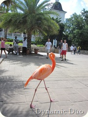 flamingo on parade;)
