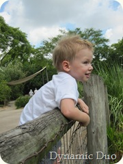 gus watching african flamingos (3)