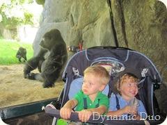 gorilla boys in front